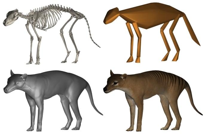 thylacine-06-696-1